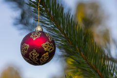 Red decorative ball on the christmas tree background in forest. Stock Photo