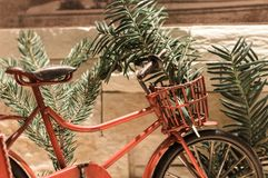 Red bicycle and pine branches royalty free stock photo