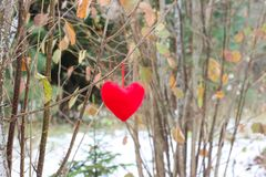 Red decorative heart on tree branch in autumn park. royalty free stock photo