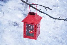 Red lantern hanging on the tree branch. Snowy winter morning in park. Red decorative lantern with candle hanging on the tree branch. Snowy winter evening in royalty free stock image