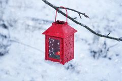 Red lantern with burning candle on fresh snow. Snowy winter morning in park. Red decorative lantern with candle hanging on the tree branch. Snowy winter evening Stock Photography