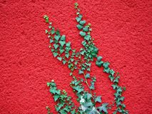 Red decorative plaster with green viny plants Stock Photo