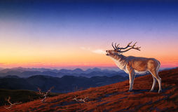 Red deer. Royalty Free Stock Photography