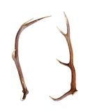 Red deer antler isolated on white Stock Images