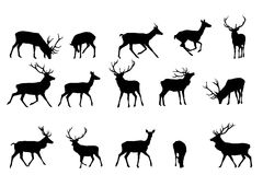 Red deer collection Stock Photos