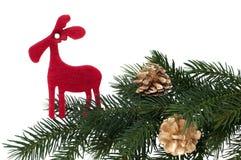 Red deer on fir branch Stock Photo