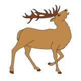 Red deer horns. Vector illustration Royalty Free Stock Image