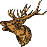 Red Deer Stag Head Roaring Drawing Stock Photography