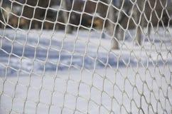 Red del hockey Imagen de archivo