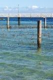 Red del tiburón en la isla del norte de Stradbroke, Queensland Imagen de archivo