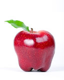 Red Delicious Apple. On white Royalty Free Stock Image