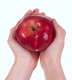 Red Delicious Apple in woman's hands. On white back Royalty Free Stock Images