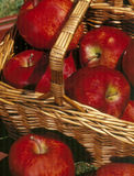 Red Delicious Apples Royalty Free Stock Photos