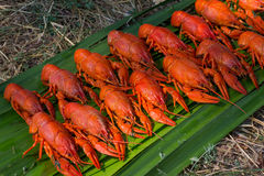 Red delicious crayfish on the grass cooked on a picnic Royalty Free Stock Photo
