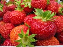 Red delicious maduro grande de la fresa con los sépalos verdes en una pila grande de cosecha en una pila grande de cosecha Fotos de archivo libres de regalías