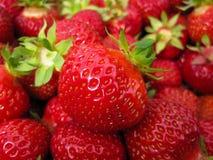 Red delicious maduro grande de la fresa con los sépalos verdes en una pila grande de cosecha en una pila grande de cosecha Foto de archivo libre de regalías