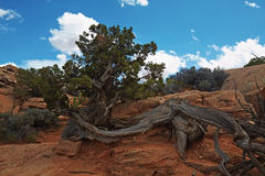 Red Desert. Arches National Park, Utah, USA Stock Photos