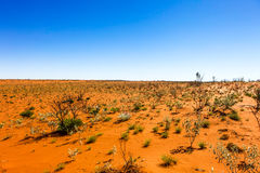 Red Desert Royalty Free Stock Photo