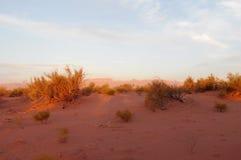 Red desert with bush in sunset light Stock Photo