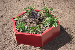 Red design garden bed close-up Royalty Free Stock Photography