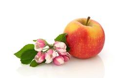 Red Dessert Apple Royalty Free Stock Photo