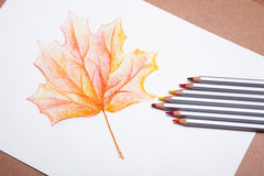 Red detailed maple tree leaf Stock Photo