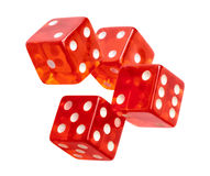 Red dice. Isolated on a white background royalty free stock photo