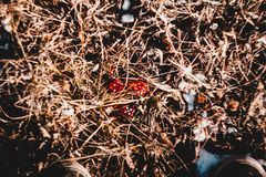 Red dice in the grass stock photos