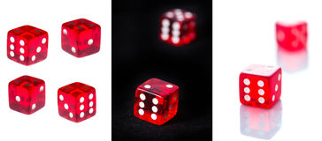 Red the dice Stock Image