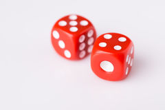 Red dice on white background. With copy space stock image