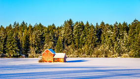 Red dilapidated and abandoned house in a wide snow covered field in Glen Valley in the Fraser Valley of British Columbia. Canada under clear blue sky Stock Image