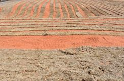 Red dirt of an Oklahoma sod farm in winter. The brown dormant grass contrasts with the bright red soil Royalty Free Stock Photography