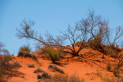 Red dirt and shadows. Bright sun casts the shadow of a tree on the red outback dirt Stock Photo
