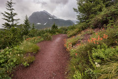 Red Dirt Trail Cuts Through Wildflowers Royalty Free Stock Images