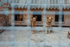 Red dog in a cage. They are waiting for a new owner Stock Photography