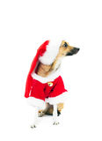 Red dog Royalty Free Stock Photo