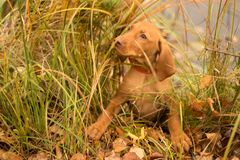 The dog hid in the green grass behind the pond royalty free stock image