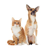 Red dog and red kitten looking Stock Photo