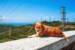 Red dog resting at the curb Royalty Free Stock Photos