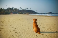 Dog sits on a sunny sand beach. stock images