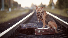 The red dog sits on a suitcase on rails Royalty Free Stock Photography