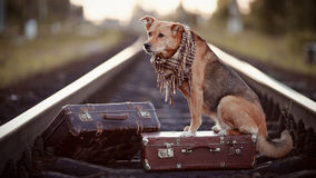 The red dog sits on a suitcase on rails Royalty Free Stock Images