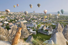 Red dog watches the flight of balloons. Cappadocia, Turkey.The greatest tourist attraction of Cappadocia. Balloon flight over the rocks of Goremy. Red dog Stock Photography