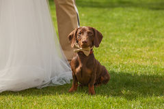 Red dog on wedding