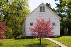 Red Dogwood trees bloom along a little white church. Stock Photography