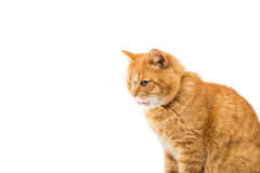Red domestic cat looking up Stock Photo