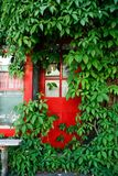 Red Door and Green Vine Royalty Free Stock Image