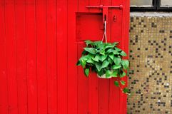 Red door and Scindapsus aureus Stock Images