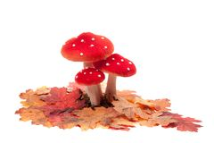 Red dotted decoration mushrooms Royalty Free Stock Images