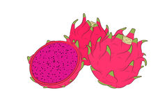 Red dragon fruit. Three dragon fruits  illustration with blank background Royalty Free Stock Photos